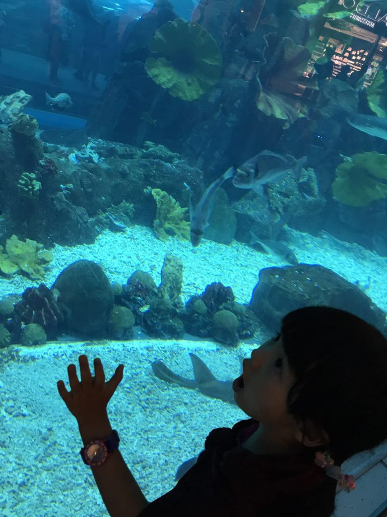 acquarium, Dubai